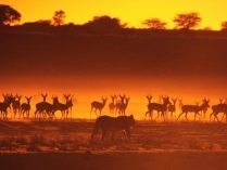 Animales al atardecer